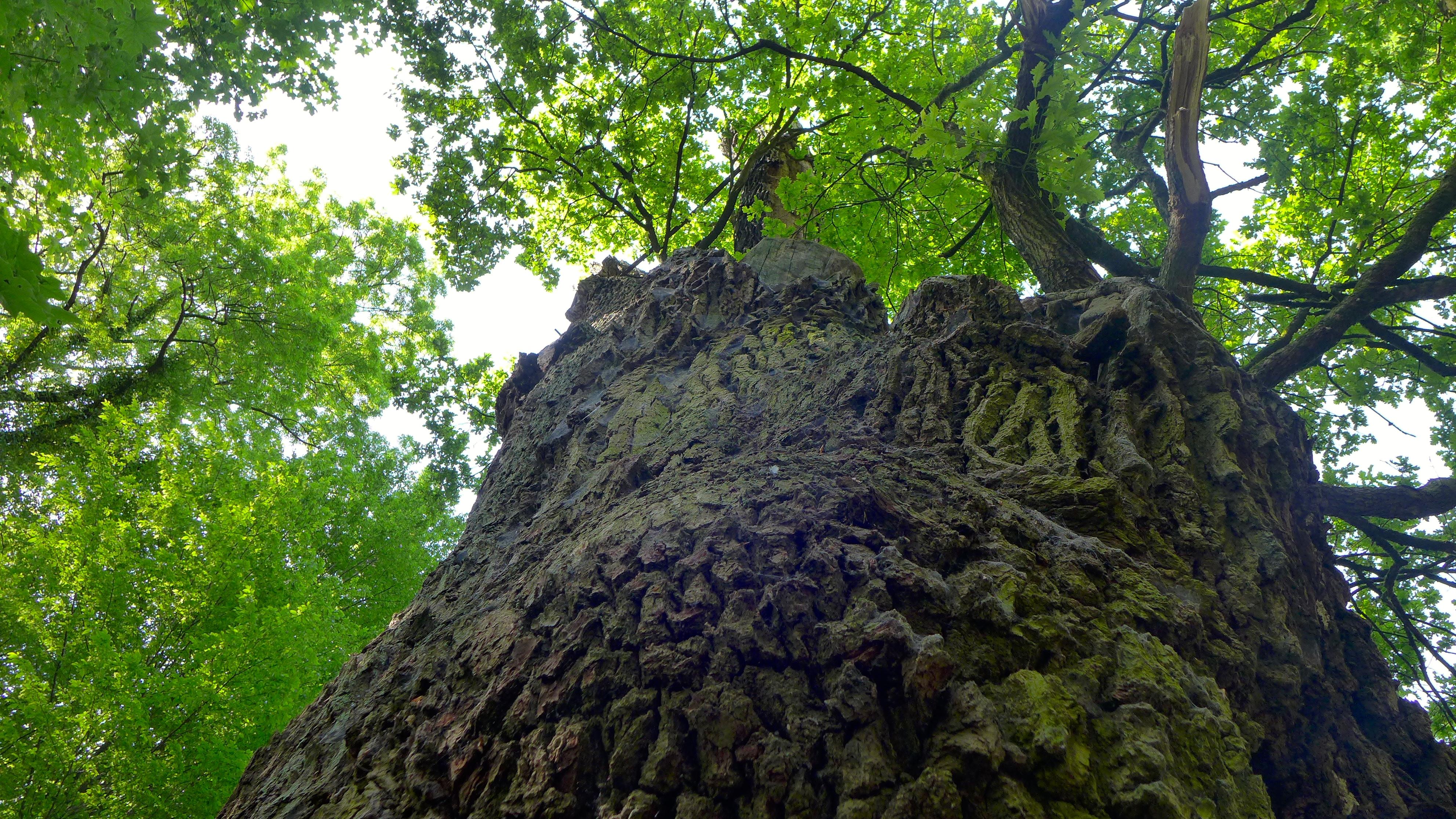 STEHEN LASSEN – Bäume verdienen mehr Schutz